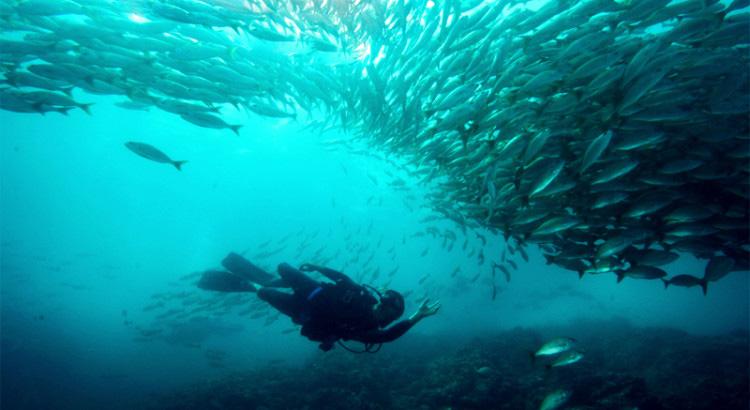 scuba diver in costa rica